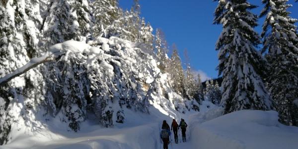 Forstweg zur Rahnstuben-Hütte