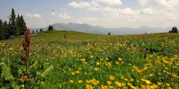 Durch Blumenwiesen zum Dreibündenstein.