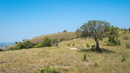 A legelő állatok tájformáló hatása, másfél méterig minden lerágva