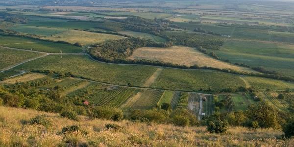 A siklóernyős starthely a Csóka-hegy oldalában