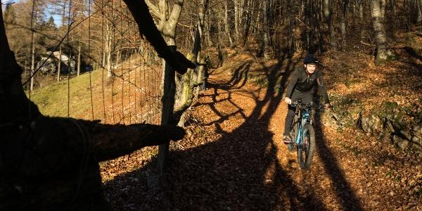 Der Abstieg im Wald von Treni
