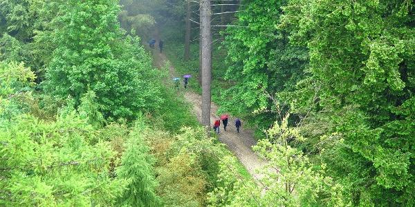 Tiefblick vom Chutzenturm auf den Wanderweg.