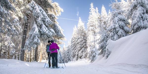 Auf dem Skiwanderweg Rennsteig