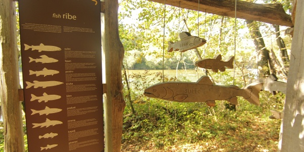 Display of common fish in River Sava (The Sava River  Trail)