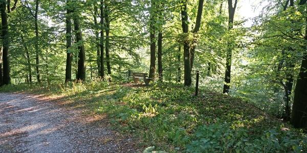 Ruhepunkt im Wald