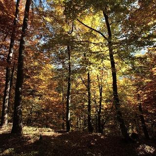 Egal zu welcher Jahreszeit - das Naturjuwel Glocke fasziniert