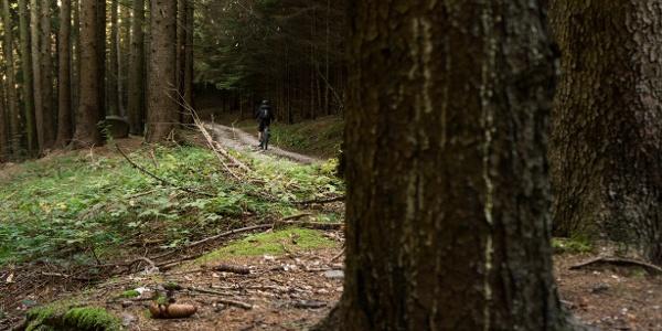 Il bosco verso Carobbi