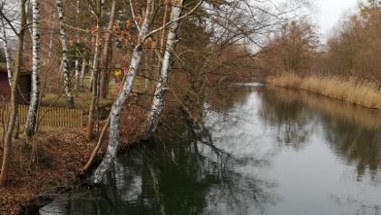 Innerste mit Birken am Flusslauf