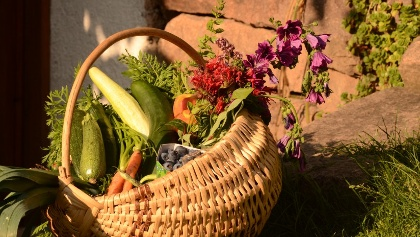 L'azienda agricola Biologica Mirtilla produce ortaggi, frutta e trasformati