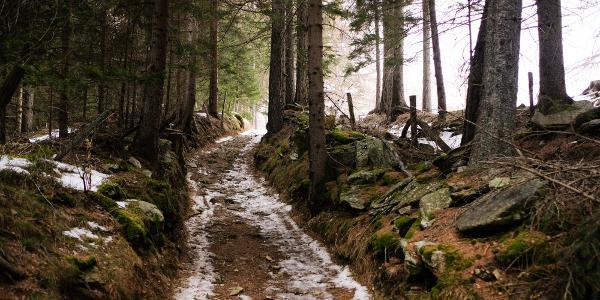 Charmante Wegerl am Anfang die sich durch den Wald schlängeln