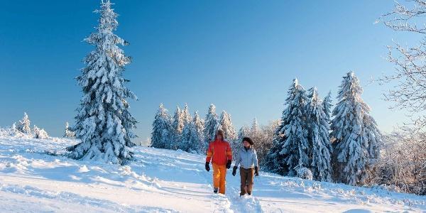 Winterwandern rund um Nordenau im Schmallenberger Sauerland