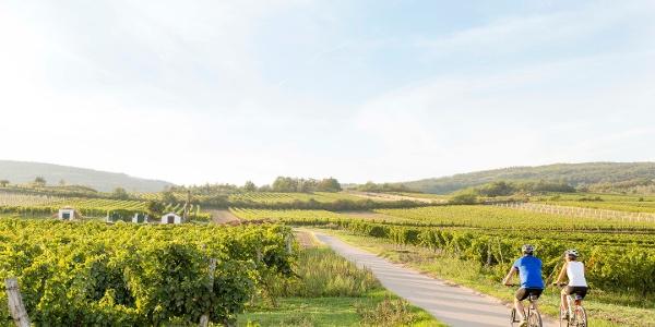 Radeln durch das Weinviertel