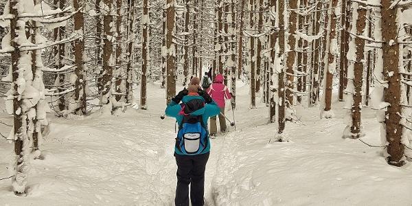 Auf dem Weg durch den Wald