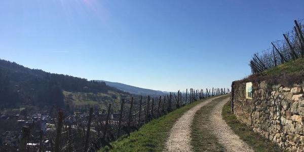 Blick vom Kastelberg Richtung Basel