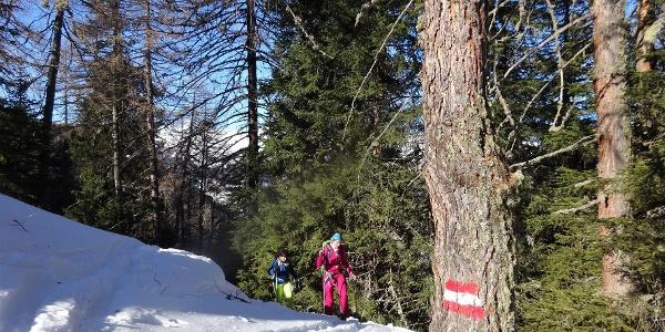 Im Bereich der Waldgrenze, ab ca. 1800 m, ist die Route identisch mit dem Sommerweg zur Ottenspitze.