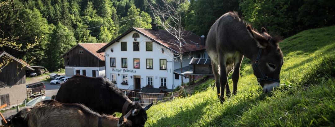 Tiere beim Gasthof Fallmühle