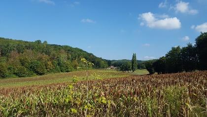 Fields on your walk