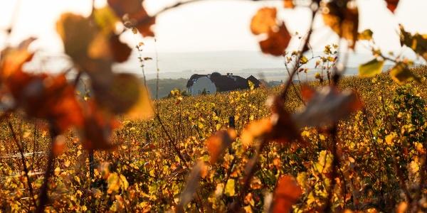 Az arany-hegyi szőlők