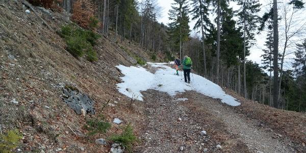 Forstweg im oberen Bereich zur Gauermannhütte