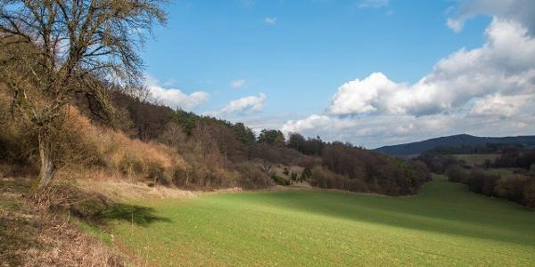 """""""Balkonweg"""" am Hang des Eschweiler Bachtales"""