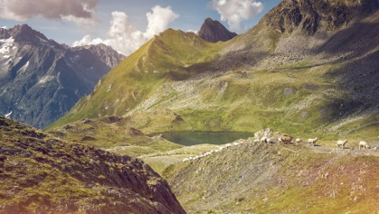 Berglandschaft mit Ziegen und See, Val Ferret