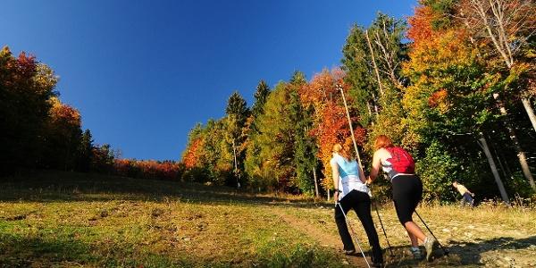 Hiking in Pohorje