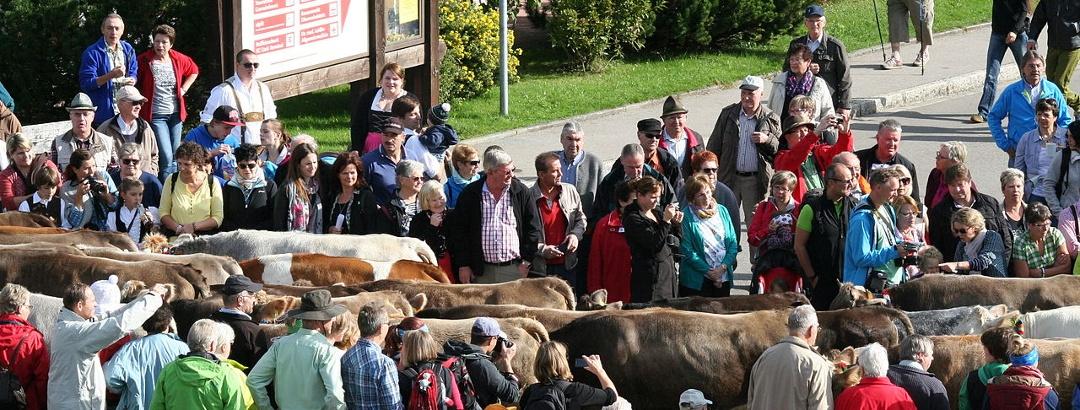 Viehscheid in Obermaiselstein