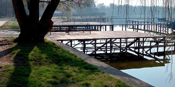 Szomorúfűz a tatai Cseke-tó partján