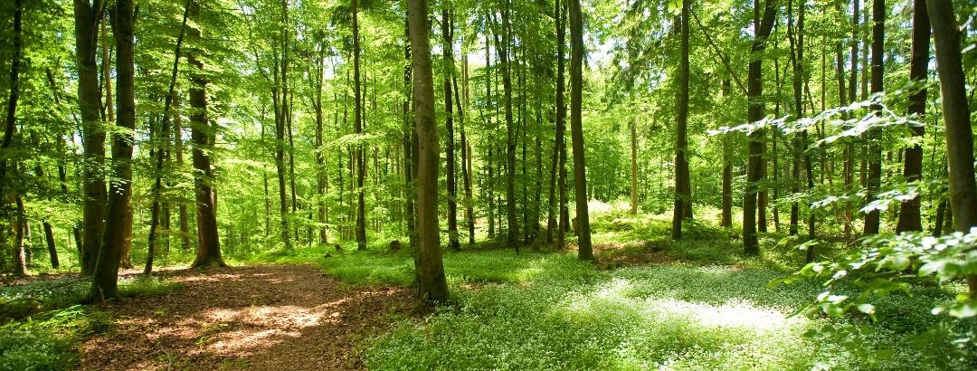 Die Ruhe der Wälder genießen