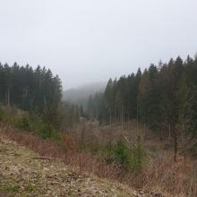 uitzicht met mist