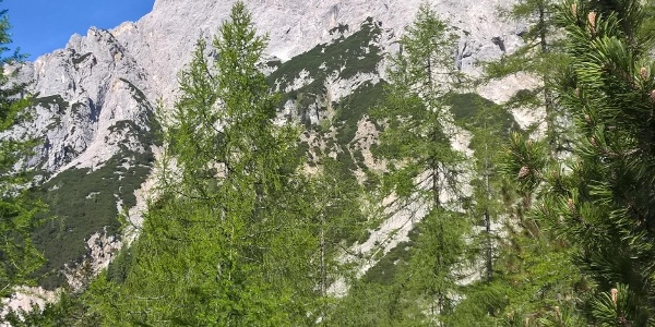 Unterhalb des wuchtigen Wamperter Schrofens quert man, die Sonnenspitze im Rücken, hinüber zum Marienberg