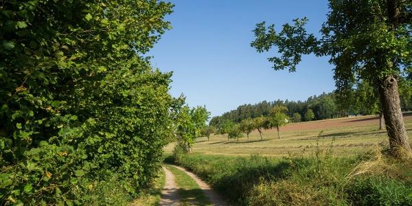 Der Weg nach Speßardt führt über offene Wiesen