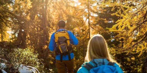 Rundwanderung von der Bettmeralp durch den Aletschwald und zurück