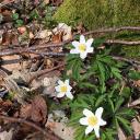 die Natur blüht auf im April