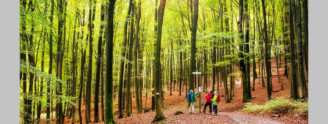 Walderlebnis Räuberland im Spessart