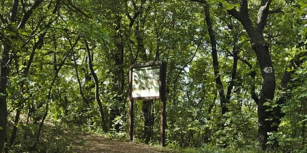 Információs tábla a Rupp-hegyi tanösvényen