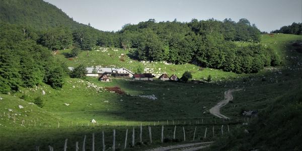 Towards the Zaprikraj Mountain pasture