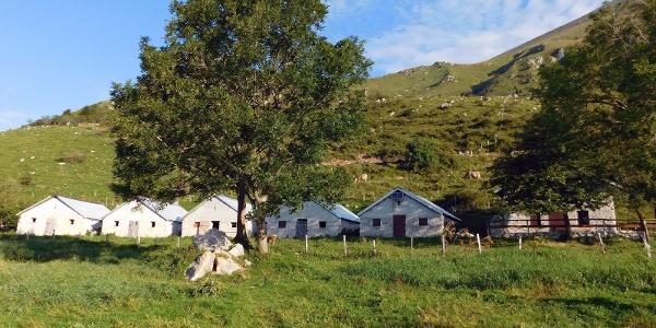 der Weg vom Krn zur Planina Kuhinja - die Planina Slapnik