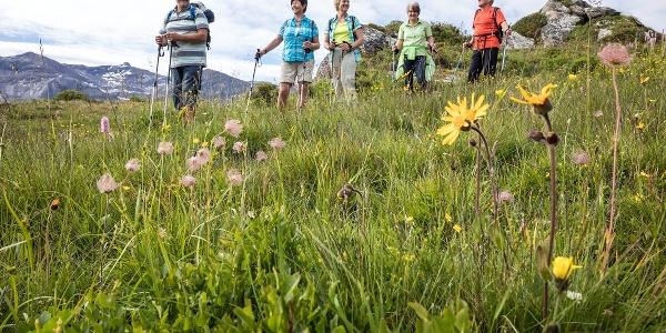 Alpenblumenweg Leiterli