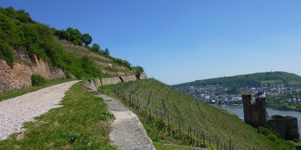 Weinhänge am Rhein
