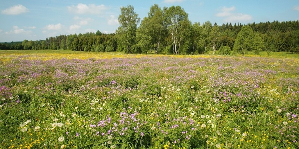 Naturschutzgebiet Moorlehrpfad Muldenhammer