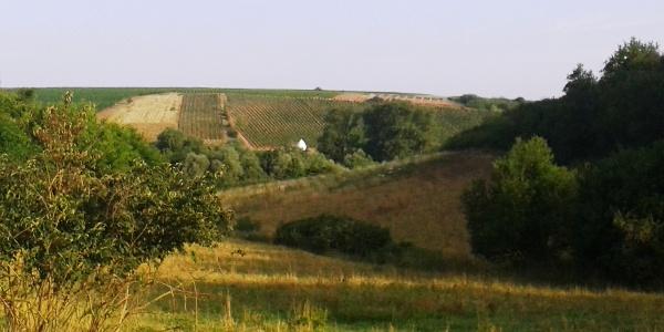 Blick ins Aulheimer Tal vom Küstenweg Flonheim
