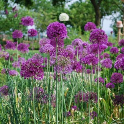 Garten Reese in Hohnhorst