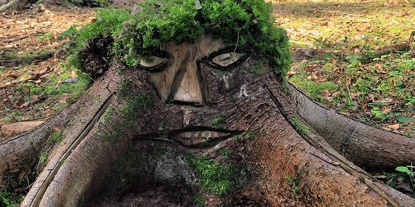 Baumstumpf-Gesicht