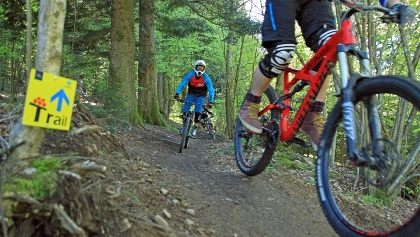 MTB-Trail im Schwarzwald