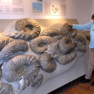 Einzigartige große Ammoniten im Heiathaus Borgholzhausen