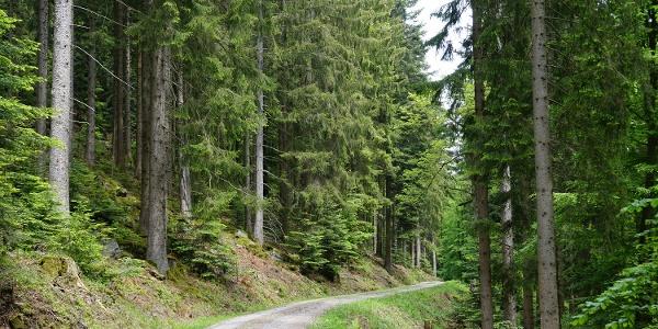 Auf hauptsächlich geschotterten Wegen wandern wir durch den nördlichen Schwarzwald.