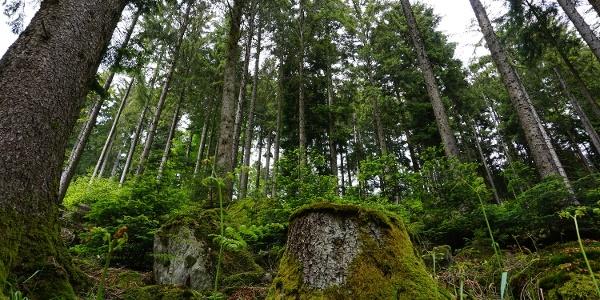 Kräfte auftanken im Wald.