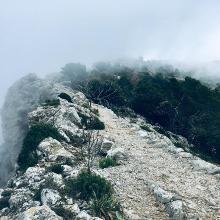 Foto von : In den Bergen über Valldemossa •  (29.05.2019 18:52:14 #2)