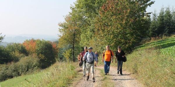 Weg am Bistersberg